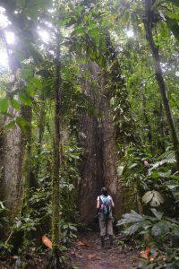 Fernanda looking at a kapok tree in the Amazon rainforest